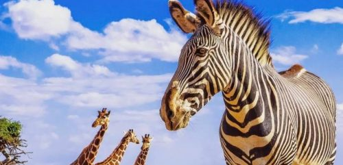UNWTO and Google Partner to Restart of African Tourism