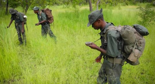 Africa Opens Discussion on Anti-Poaching Efforts